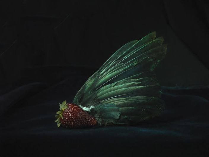 Organic Strawberry and Tui wing Fiona Pardington